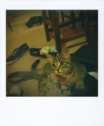 Very cute kitten looking guilty